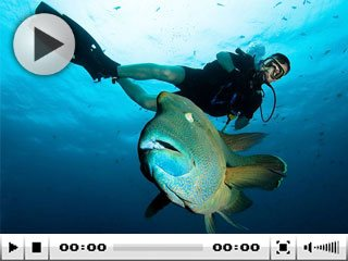 Scuba diving vacations with Dive The World will bring you spectacular marine encounters