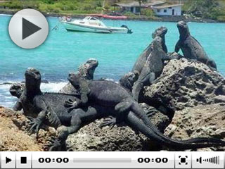 Diving with marine iguanas at the Galapagos Islands, Ecuador
