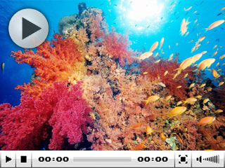 Diving in Red Sea - photo copyright of Egypt Tourism [photographer: CHICUREL Arnaud/hemis.fr]