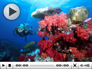 Liveaboard diving in Fiji - photo courtesy of Garden Island Resort