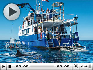 Liveaboard cage diving in Australia with Princess II