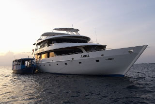The Maldives liveaboard MV Amba