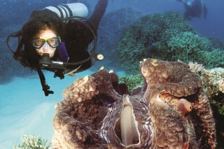 PADI Discover Scuba Diving with Dive The World