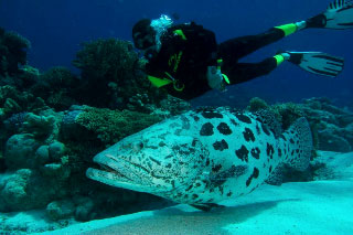 PADI Underwater Naturalist Specialty Course with Dive The World