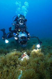 PADI Underwater Videographer - photo courtesy of ScubaZoo