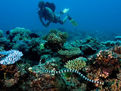 Review our dive site descriptions of Kadavu