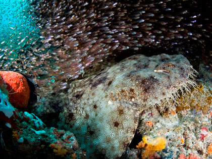 Diving in Raja Ampat - photo courtesy of Stephen Wong and Takako Uno