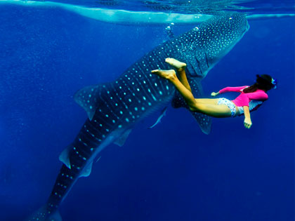 Diving in Maldives - photo courtesy of Explore Ventures