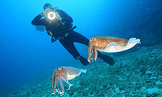 Dive The World guest Adam taking a nice cuttlefish pic