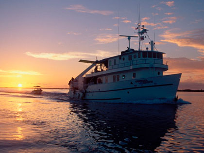 Discover our Cocos liveaboard adventure opportunities