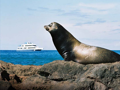 Galapagos wildlife cruises