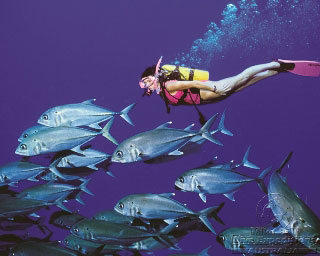 Diving on Australia's Great Barrier Reef - photo courtesy of Mike Ball Expeditions