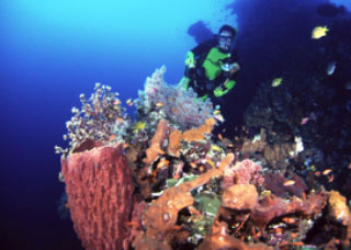 Barrel sponges are a common sight when diving at Lembongan Island, Bali