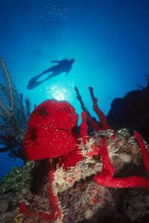 Colorful sponges and warm clear water are two of the Belize scuba diving attractions - photo courtesy of Belize Aggressor