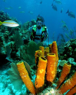 Diving at Lighthouse Atoll - photo courtesy of Belize Aggressor