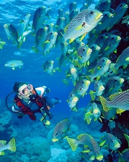Diving the Great Barrier Reef, as Kate Hudson loves to, the fish don't know who you are - photo courtesy of Scubapro