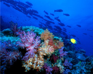 A typical underwater scene that will great scuba divers in the Andaman Sea, Thailand