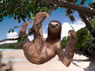 This sloth seems to agree that Costa Rica is the happiest country on earth