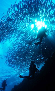 Large schools of fish are a common sight in the Maldives - photo courtesy of ScubaZoo