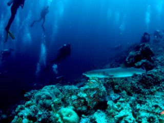 Diving with reef sharks in the Maldives - photo courtesy of ScubaZoo