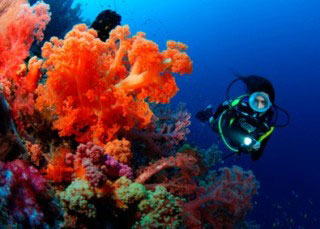 Diving at Beqa Island, Fiji - photo courtesy of Waidroka Bay Resort
