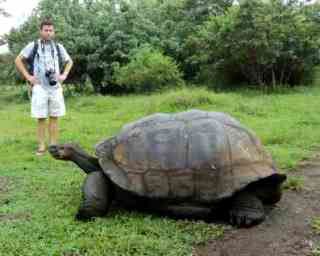 A giant tortoise in Galapagos can grow a carpace 1.8m long - photo courtesy of Gavin Macaulay