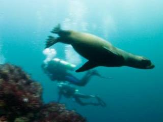 Dive with sea lions in the Galapagos Islands - photo courtesy of Michelle Benoy-Westmorland