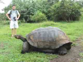 Giant Galapagos tortoise - photo courtesy of Gavin Macaulay