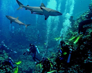 Sharks at North Horn - Great Barrier Reef diving in Australia - photo courtesy of Undersea Explorer