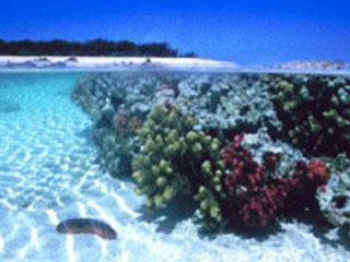 Underwater scenes from Northwest Island, GBR, Queensland