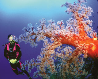 Diving in Australia in the Coral Sea - photo courtesy of Mike Ball