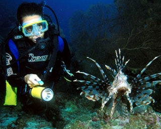Lionfish are found throughout the liveaboard dive sites of Thailand - photo courtesy of Marcel Widmer - Seasidepix.com