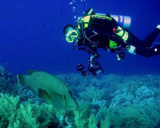 Liveaboard diving in the Red Sea with Napoleon wrasse - photo courtesy of Detlef Sarrazin