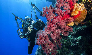Visibility and reef health at Holmes Reef, Australia - photo courtesy of Spoilsport