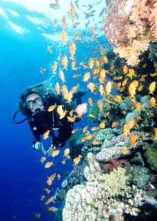 Diving with soft corals and anthias at the Brothers - photo copyright of Egypt Tourism [photographer: CHICUREL Arnaud/hemis.fr]
