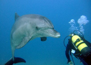 Diving with dolphins in Hurghada, the Red Sea - photo courtesy of Ashraf Hassanin