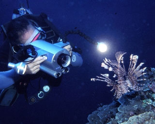 Diving at night with a spotfin lionfish - photo courtesy of Mike Greenfelder, Fiji