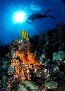 Underwater scenes like these are why most tourists visit the Tukang Besi Archipelago