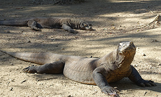 The famed Komodo dragons, courtesy of Pierre-Edouard Crouzier