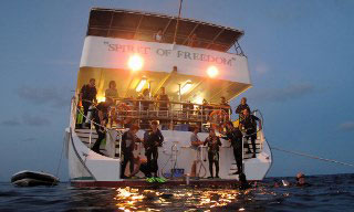 Liveaboard diving in Australia from Spirit of Freedom's dive platform