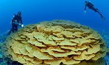 Enjoying the pristine corals