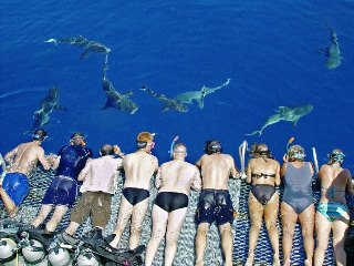 Shark watching on Australia's Great Barrier Reef - photo courtesy of Undersea Explorer