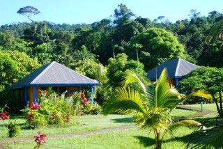 The garden setting for the bures at Waidroka Bay Surf and Dive Resort, Viti Levu