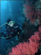 Avoid injuries while diving coral reefs