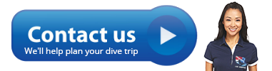 Please use our simple contact form. We are here to help you plan your dive trip