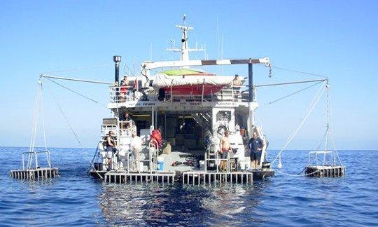 Nautilus Explorer Mexico Liveaboard Diving Safaris Dive
