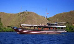 Weta Molas