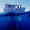 Diving the Outer Barrier Reef from MV Sunkist