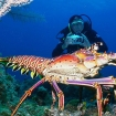 Take some unforgettable pics when diving Bahamas