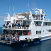 Diving the Great Barrier Reef on the Kangaroo Explorer, Cairns